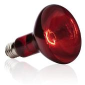 lampa infrakrasnaya